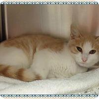 Adopt A Pet :: FELIX - Marietta, GA