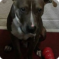 Adopt A Pet :: Hefner at Hazel Park - Warren, MI
