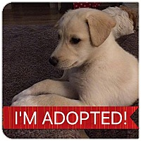 Adopt A Pet :: Cecil - Regina, SK