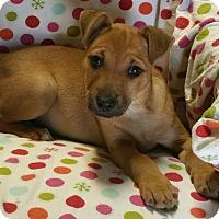 Adopt A Pet :: Mocha - Los Angeles, CA