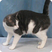 Adopt A Pet :: Joy - Maynardville, TN
