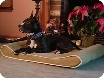 Terrier (Unknown Type, Medium) Dog for adoption in Gibbstown, New Jersey - Waylan