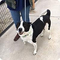 Adopt A Pet :: Jack - Cedaredge, CO