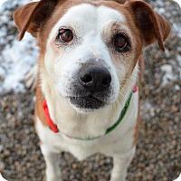 Adopt A Pet :: Trickster - Newberg, OR