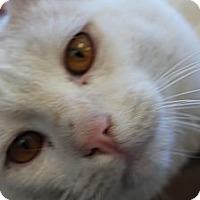 Adopt A Pet :: Dennis - Santa Monica, CA