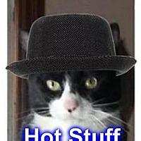 Adopt A Pet :: SHERLOCK Suave Tuxedo 25.00 - Rochester, NY