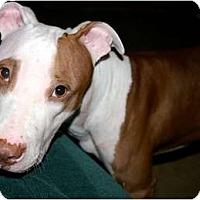 Adopt A Pet :: Trinity - Orlando, FL