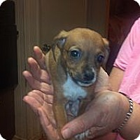 Adopt A Pet :: Almond - Hazard, KY