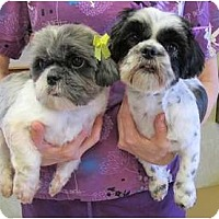 Adopt A Pet :: Thelma&Louise - Kingwood, TX