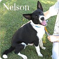 Adopt A Pet :: Nelson - Scottsdale, AZ