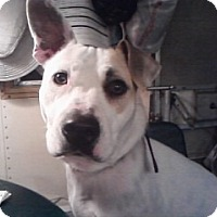 Adopt A Pet :: Sarah-thrown from car - Norwalk, CT