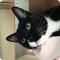 Adopt A Pet :: Polly - Newport Beach, CA