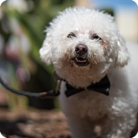 Adopt A Pet :: Toby - Foster or Adopt - San Francisco, CA