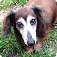 Adopt A Pet :: Mattie Maltshop - Houston, TX