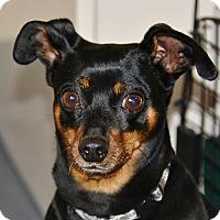 Adopt A Pet :: Juice - Meridian, ID