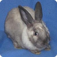 Adopt A Pet :: Jingles - Woburn, MA