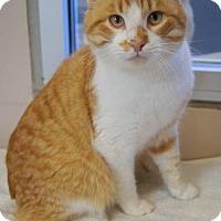 Adopt A Pet :: Purrince - McKinney, TX