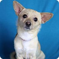 Adopt A Pet :: Gisele - Minneapolis, MN
