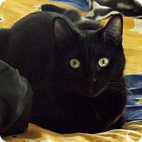 Adopt A Pet :: Kuma - Orange, CA