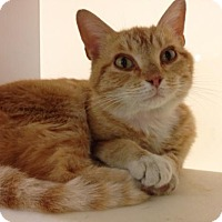Adopt A Pet :: Peaches - Herndon, VA