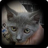 Adopt A Pet :: SPIRIT - Red Bluff, CA