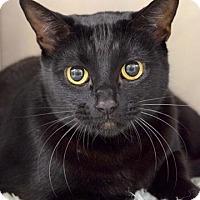 Adopt A Pet :: Artemis - Dublin, CA