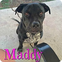 Adopt A Pet :: Maddy - Scottsdale, AZ