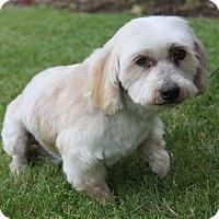 Adopt A Pet :: DANIEL - Newport Beach, CA