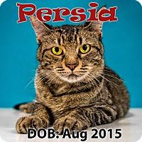 Adopt A Pet :: Persia - Chandler, AZ