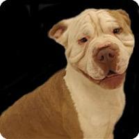 Adopt A Pet :: Mumbles - Osage Beach, MO