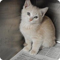Adopt A Pet :: Dolly - Pikeville, KY