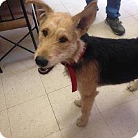 Adopt A Pet :: Marshall - Rexford, NY