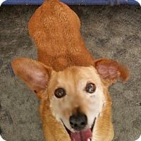 Adopt A Pet :: Rover - Urbana, OH