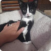 Adopt A Pet :: Chloe - Loveland, CO