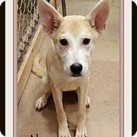 Adopt A Pet :: Alma - Tombstone, AZ