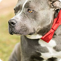 Adopt A Pet :: Chance - Pittsburgh, PA