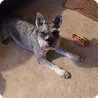 Adopt A Pet :: Julius - Blue Bell, PA