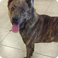 Adopt A Pet :: Tonka - Las Vegas, NV