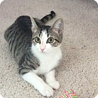 Adopt A Pet :: Nala - Youngsville, NC