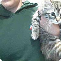 Adopt A Pet :: COLLETTE - Plano, TX