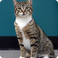 Adopt A Pet :: Finn - Chattanooga, TN