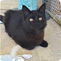 Adopt A Pet :: Ashlei - Umatilla, FL