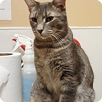 Adopt A Pet :: Ike - Smithfield, NC