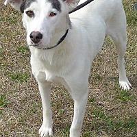 Adopt A Pet :: Izzy - Manning, SC