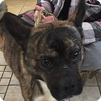 Adopt A Pet :: Max - Middletown, NY
