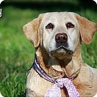 Adopt A Pet :: Dolly - Albany, NY