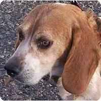 Adopt A Pet :: Carrie - Phoenix, AZ