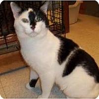 Adopt A Pet :: Neptune - Acme, PA