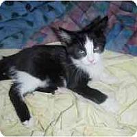 Adopt A Pet :: Sugar Snap Pea - Milwaukee, WI