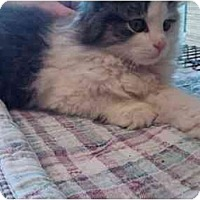Adopt A Pet :: Isabella - Erie, PA